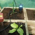Two pH meters in lettuce soil in greenhouse