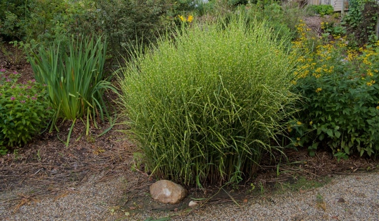 How To Transplant Grass Full Guide All Of The Whats Hows