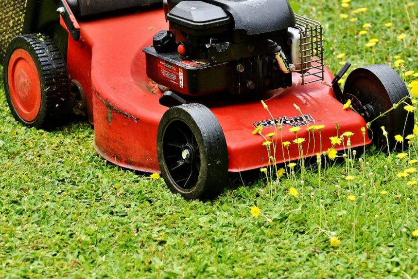 red and black push mower on green grass field, Lawn Mower, Lawn Mowing