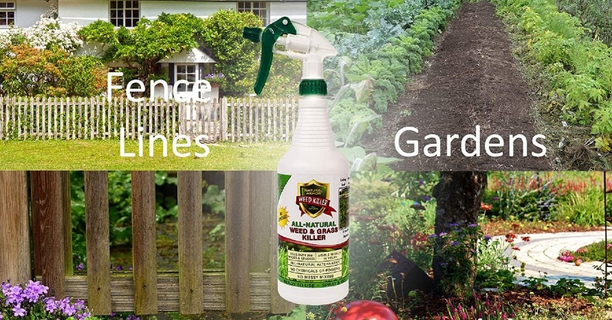 Organic Weed Killer featured image