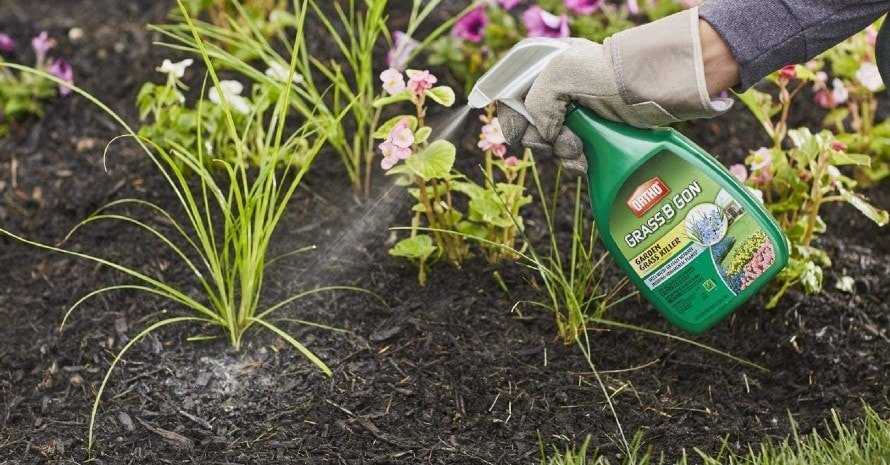Ortho 0438580 Grass B Gon Garden Grass Killer Ready-to-Use featured image