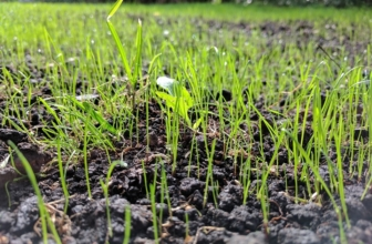 Best Grass Seed for Sandy Soil: Choosing the Right Seed
