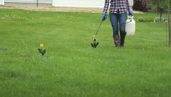 2,4-D Weed Killer: Sifting Grass from Broadleaves