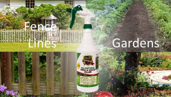 Best Organic Weed Killer to Buy in 2021
