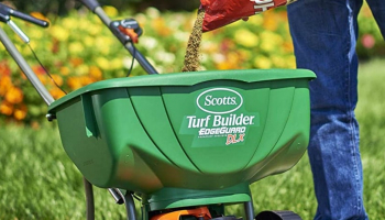 Best Lawn Insecticide: The Most Effective Remedies