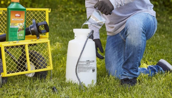 Best Crabgrass Killer to Treat Your Lawn