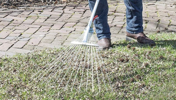 Best Rake for Pine Needles: When a Needle Can't Get Through