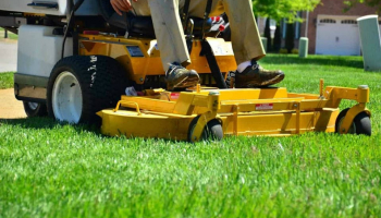 5 Best Lawn Weeds and Feeds in 2021: Check the Best Deals for Your Lawn Care