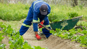 Best Insecticide for Vegetable Garden: 3 Products You Should Try Right Away